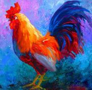 rooster-bob-marion-rose